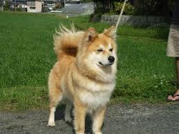 Domestic animals- dog